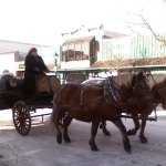 Horse Carriage Ride 2009